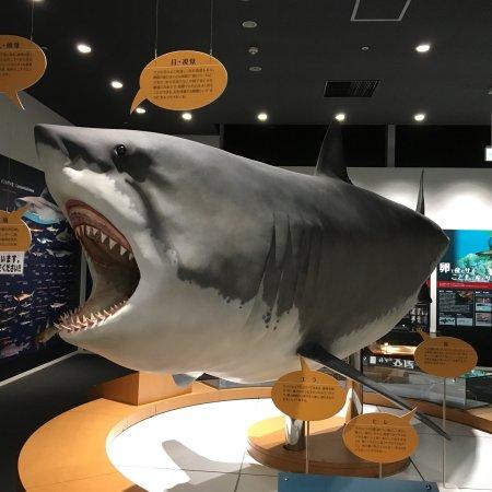 Kesennuma Uminoichi Shark Museum