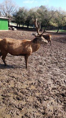 Yaar Haayalim - Deer Forest: יפה