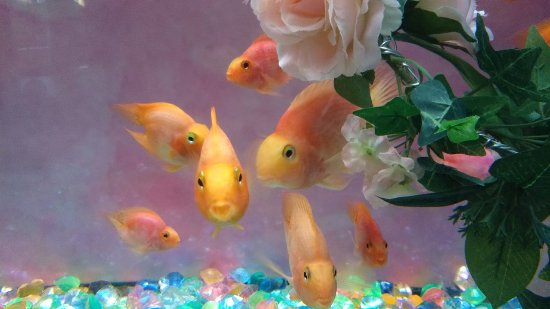 World Fresh Water Aquarium Aquatotto Gifu