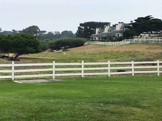 Mission Ranch: Vista
