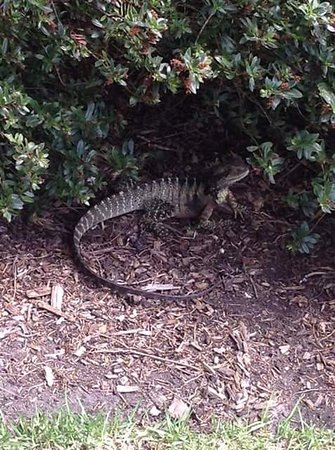 Royal Botanic Gardens Melbourne : wildlife in the gardens