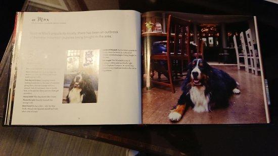 Windmill Clapham: Famous pub dog Max