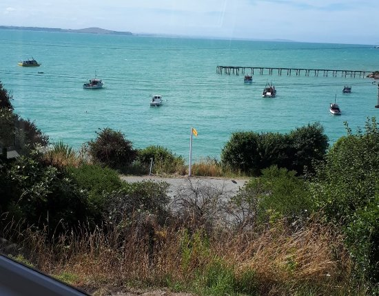 Moeraki Village Holiday Park : the view from our tourist flat