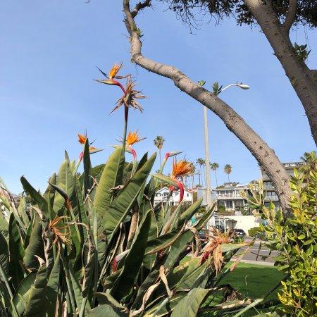 Laguna Beach: photo2.jpg