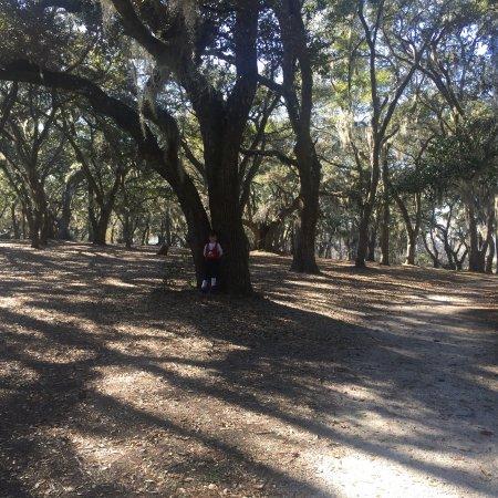 Brookgreen Gardens: photo0.jpg