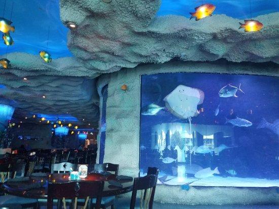Aquarium Restaurant: 20180121_112107_large.jpg