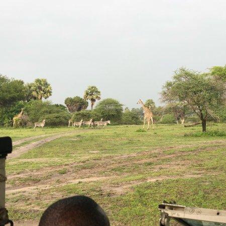 Selous Game Reserve, تنزانيا: photo6.jpg