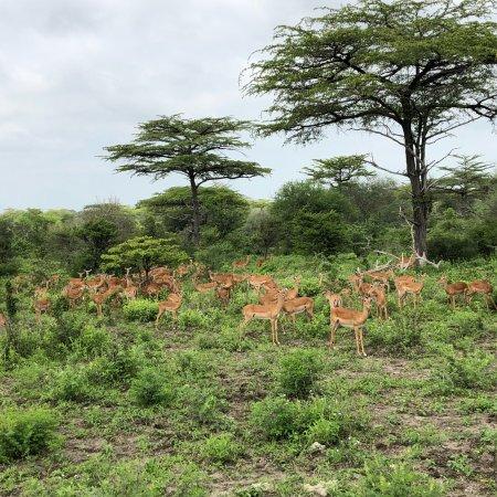 Selous Game Reserve, تنزانيا: photo7.jpg