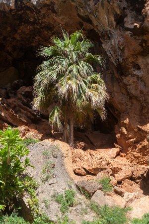 Kalaheo, هاواي: In the cave