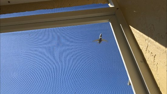 Charter Club Resort of Naples Bay : Airplane flying over taken from the lanai