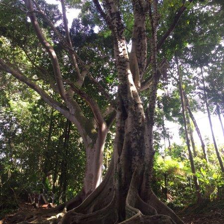 Wahiawa Botanical Garden: photo9.jpg