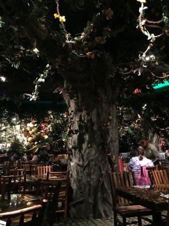 Rainforest Cafe Bloomington Mn