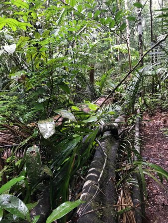 Tracking in Amazon Forest / Hotel area - Picture of Amazon