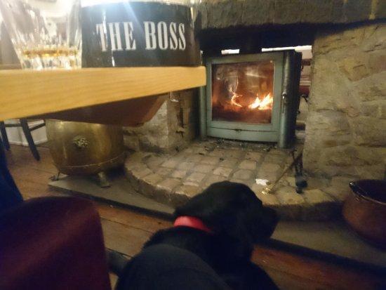 Fenny Bentley, UK : Love Dogs