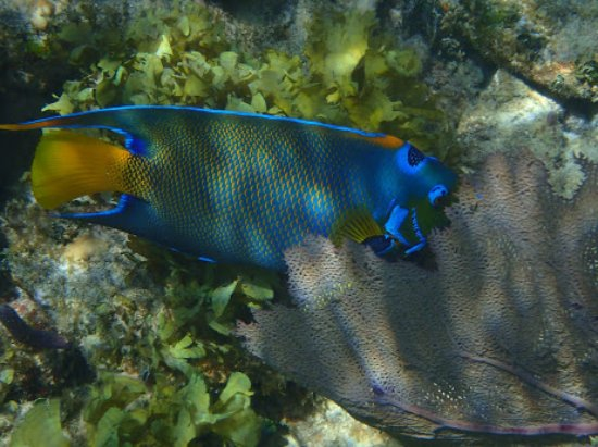 Sandy Bay, Honduras: Colorful fish abundant around the reef system.