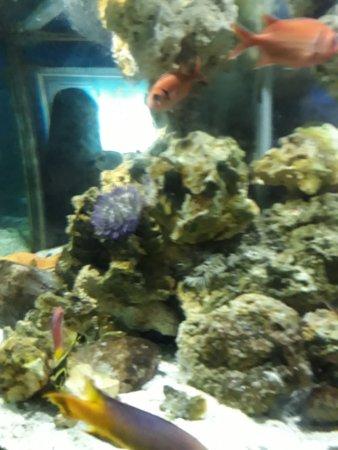 Foto de Ubatuba Aquarium