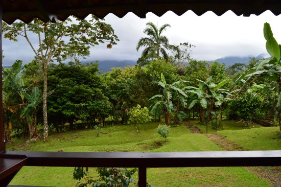 La Anita Rainforest Ranch: View from the dining area
