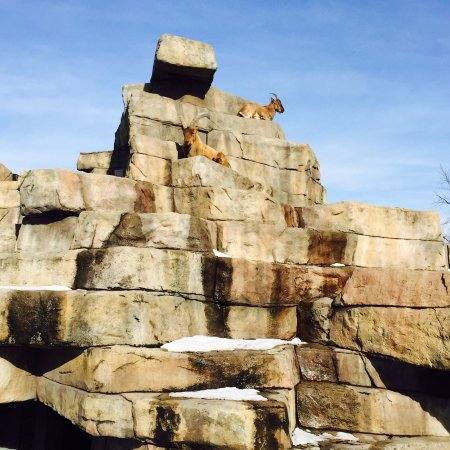 Racine Zoo: During winter time it was not that much animals but the weather was warm enough for a great walk