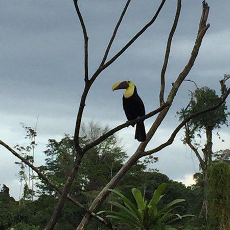Boca Tapada, Costa Rica: photo7.jpg