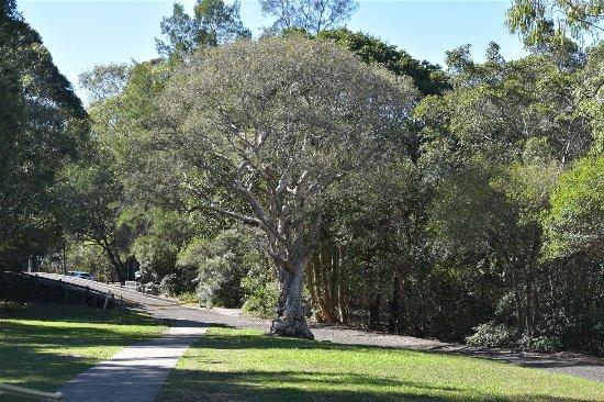 Gladesville, ออสเตรเลีย: Nice greenery