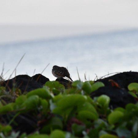 Wailea Beach : photo8.jpg