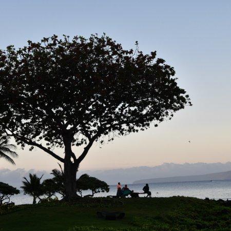 Wailea Beach : photo9.jpg