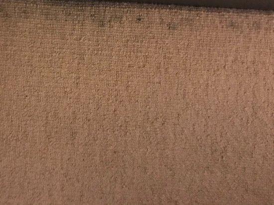 Quest Gordon Place: Filthy carpet