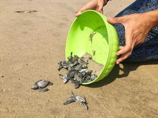 Playa Viva: Turtle sanctuary