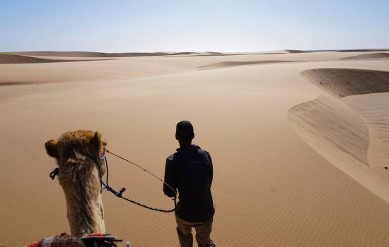 Swakopmund, Namibie : on the camel ride