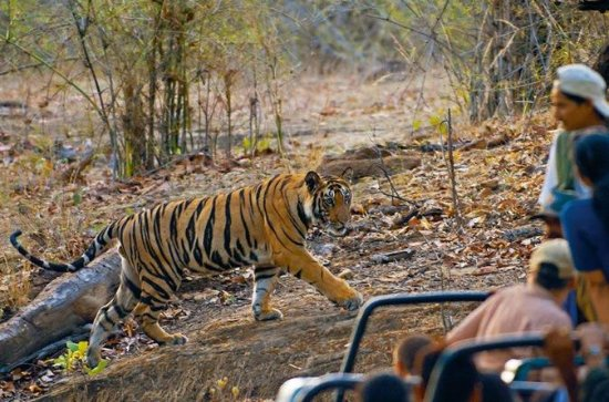 7 Day Bandhavgarh Tour