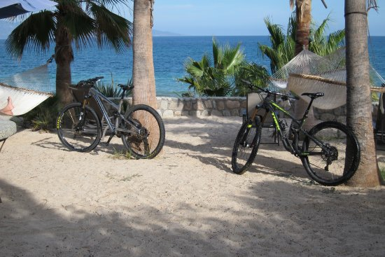 Cog Wild Mountain Bike Tours Foto