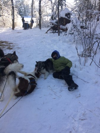 Wintergreen Dogsled Lodge: A break for some cuddles.