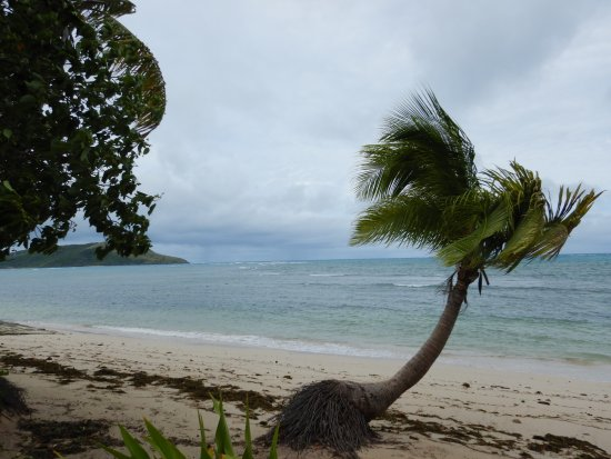 Blue Lagoon Beach Resort: the winds brought in the seaweed, it was lovely and clear the day before on the beach