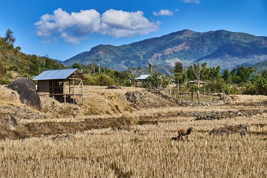 Kangpokpi District, Indien: Field after crop near Selsi Village.
