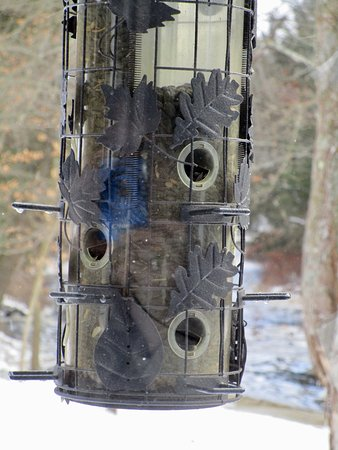 Bear Creek, PA: Bird Feeder Outside Window