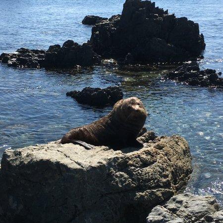 Seal Coast Safari Photo
