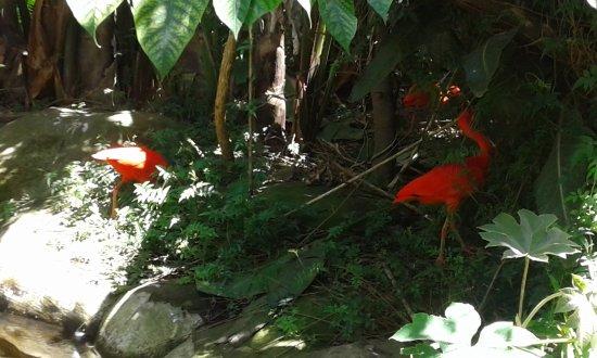 Birds of Eden: Finding shade