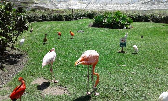 Birds of Eden: Beautiful