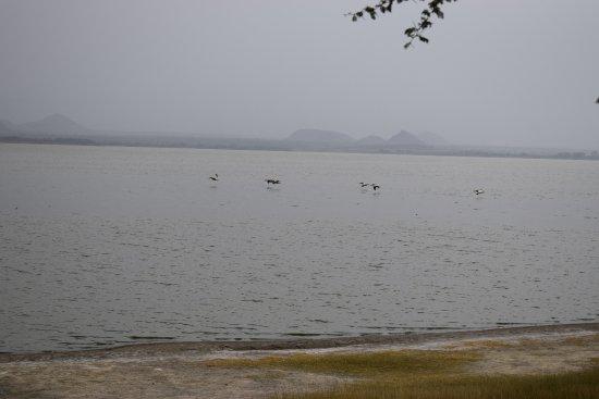 Foto de Lake Elementaita