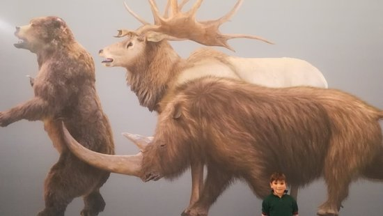 Museo de la Evolución Humana: IMG_20180121_192610_large.jpg