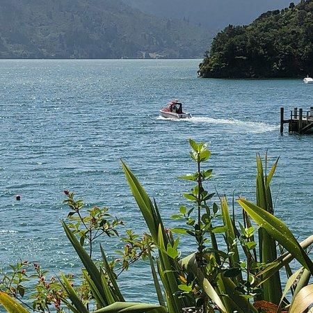Kenepuru, Neuseeland: photo1.jpg
