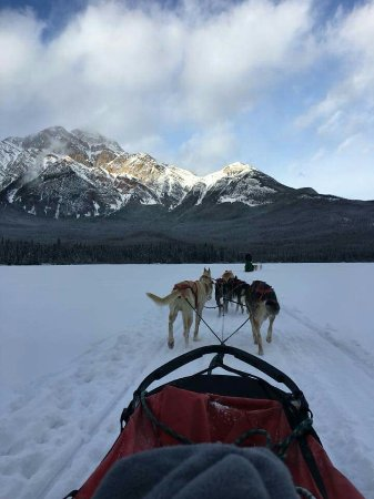 Cold Fire Creek Dog Sledding Reviews