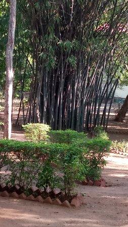 Tiger Moon Resort: Campus