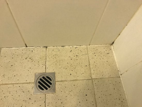 Stamford Plaza Adelaide: Mouldy shower in tiny bathroom. Not acceptable.
