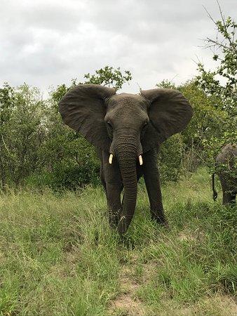 Gambar Ngala Private Game Reserve