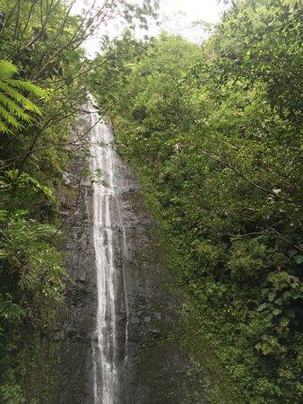 Manoa Falls Honolulu All You Need To Know Before You Go With Photos Tripadvisor