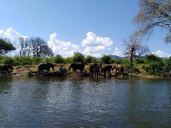 Chirundu, Zambia: IMG_20180121_150727_large.jpg