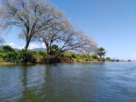 Chirundu, Zambia: IMG_20180121_150720_large.jpg