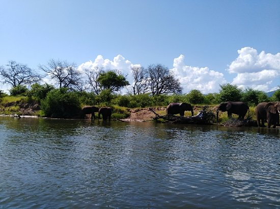 Chirundu, Zambia: IMG_20180121_150716_large.jpg