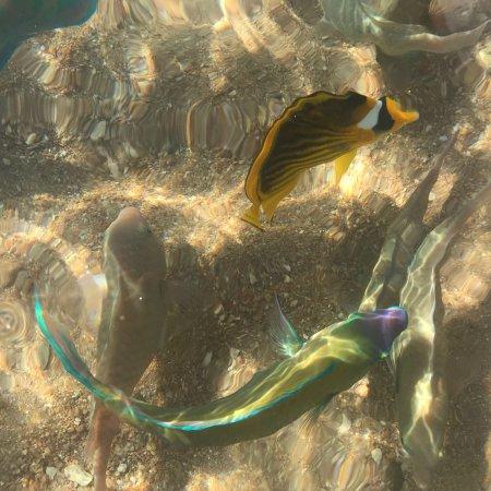 Reef Oasis Blue Bay Resort: photo0.jpg
